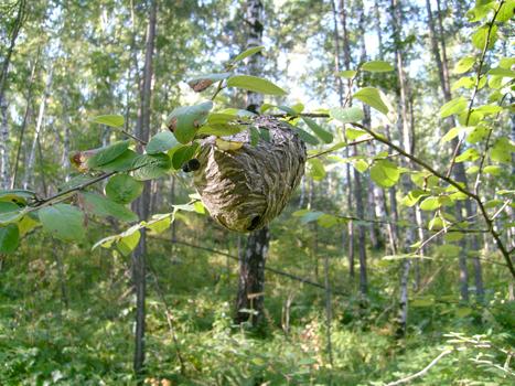 nid visible arbre enlevement idf rapide