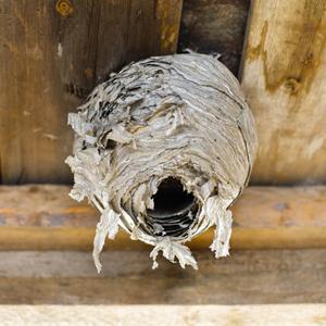 Preparer la destruction de nid de guepes