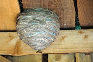 Detruire un nid de guepes avec un sceau d'eau
